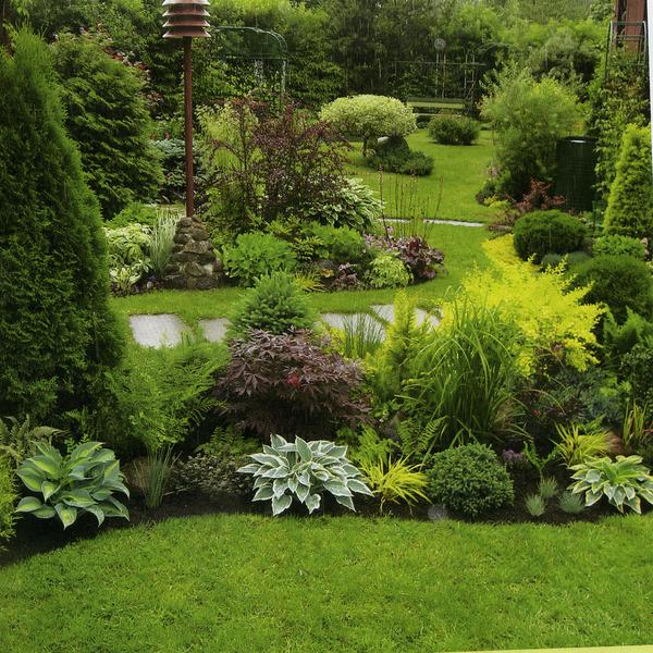 Кустарники и живые изгороди создают и