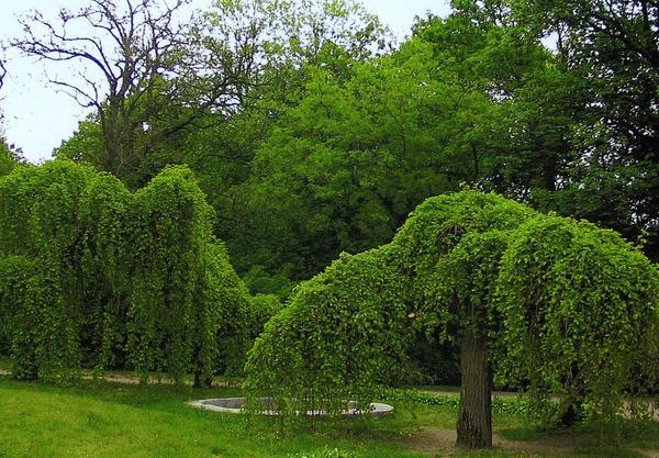 лиственные деревья в графике